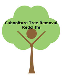 Tree Surgeons & Arborists In Redcliffe - Caboolture Tree Removal Redcliffe