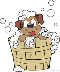 Pet Groomers In Castle Forbes Bay - Hobart Mobile Dog Wash and Grooming - Barking Bubbles