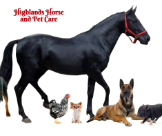 Veterinarians In Moss Vale - Highlands Horse and Pet Care