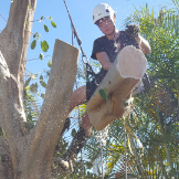 Cape Tree Service - Customer Reviews And Business Contact Details