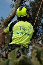 Tree Surgeons & Arborists In Yugar - North Brisbane Trees