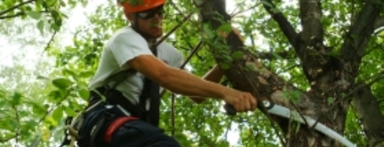 Photo Gallery - Arbator Tree Services