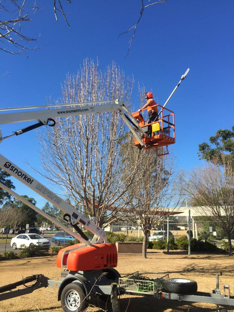 Photo Gallery - Tree Solution NSW Pty Ltd
