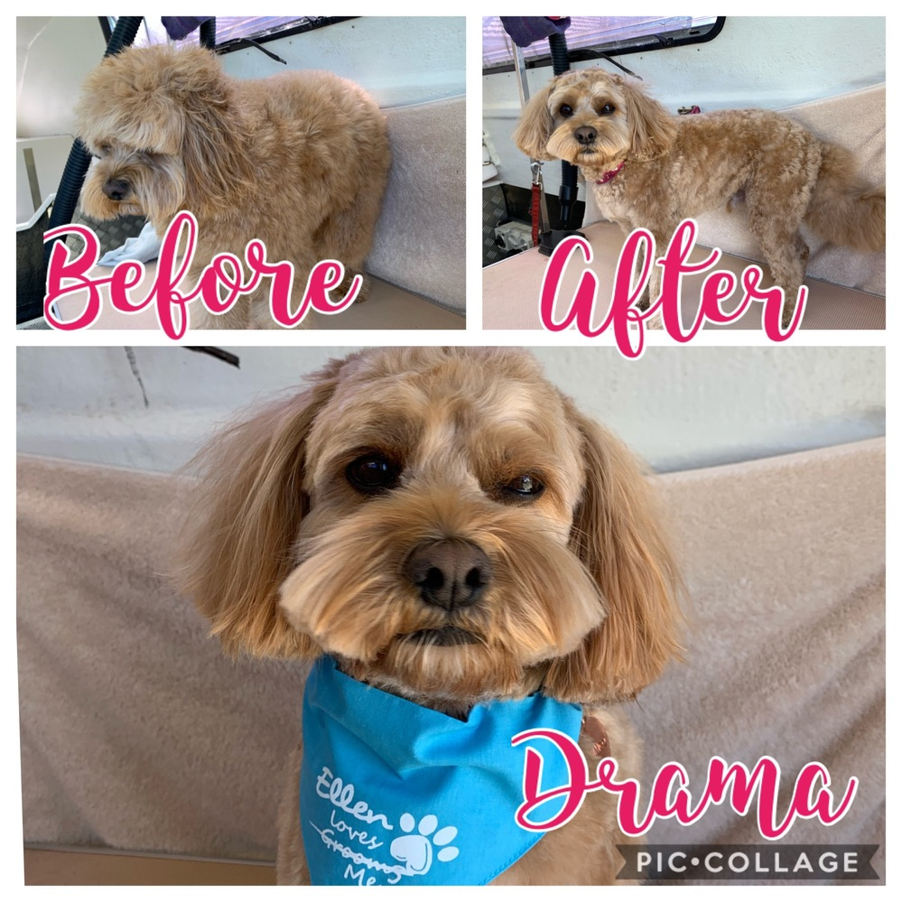 Photo Gallery - Ellen's Dog Grooming