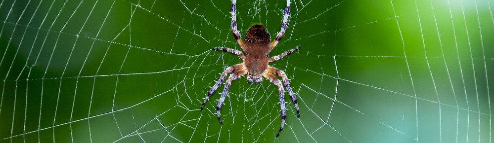 How to remove spiders from the house?